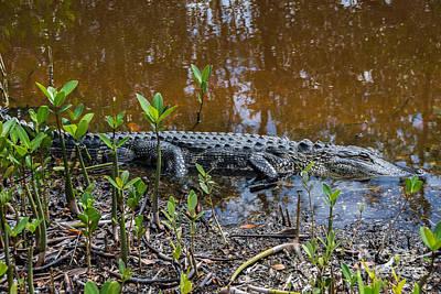Alligator Print by Anne Kitzman