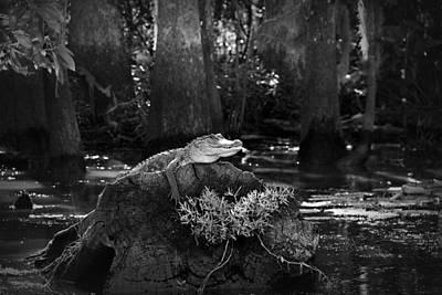 Alligator Bayou Photograph - Alligator In The Louisiana Bayou by Mountain Dreams