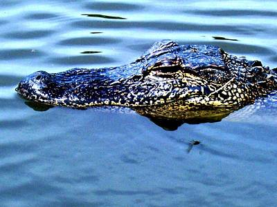 Alligator With Spider Print by Robin Lewis