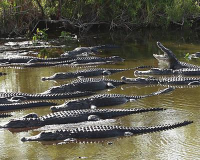 Alligators 8 Print by Rudy Umans