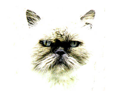 'allo Kitty Original by Paul Sutcliffe