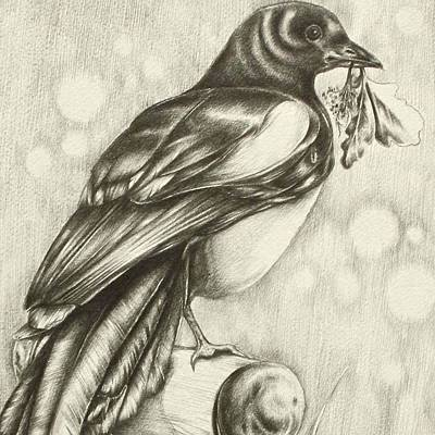 Magpies Drawing - Allotment Guest by Helen Bennett