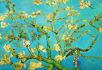 Plant Painting - Almond Branches In Bloom by Celestial Images