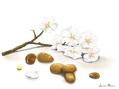 Almond Painting - Almonds by Veronica Minozzi