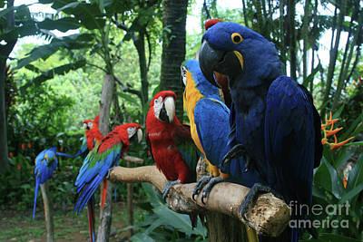 Aloha Kaua Aloha Mai No Aloha Aku Beautiful Macaw Print by Sharon Mau