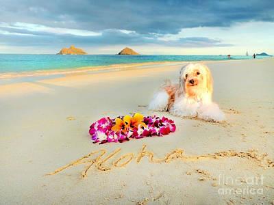 Hawaii Dog Photograph - Aloha Lanikai  by Kristine Merc