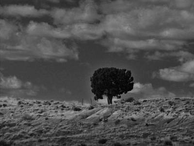 Photograph - Alone On The Ridge by Rob Hallifax