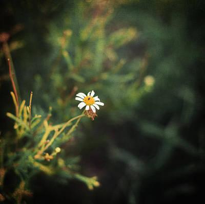 Impressionist Photograph - Alone by Taylan Soyturk