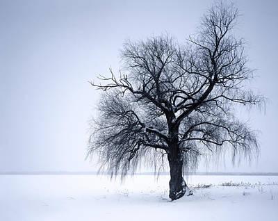 Alone Tree Print by Romeo Koitmae