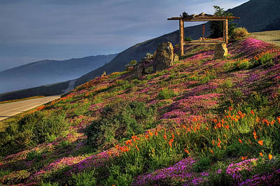 Phlox Photograph - Along The Pacific Highway by Donna Kennedy