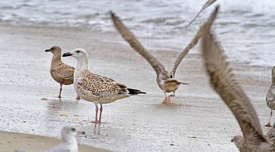 Seagull Photograph - Along The Shoreline by Betsy C Knapp