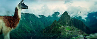 Ancient Civilization Photograph - Alpaca Vicugna Pacos On A Mountain by Panoramic Images