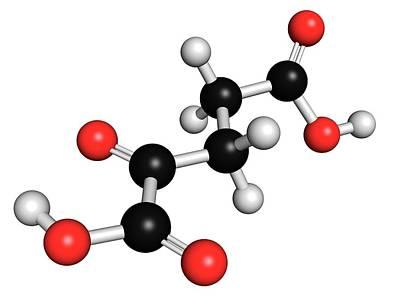 Alpha-ketoglutaric Acid Print by Molekuul