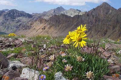 Alpine Flowers Print by Aaron Spong