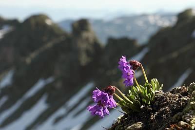 Alpine Flowers Print by Martin Rietze