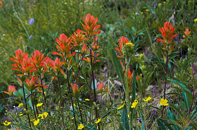 Flowers On Line Photograph - Alpine Wildflowers 3 by Aaron Spong