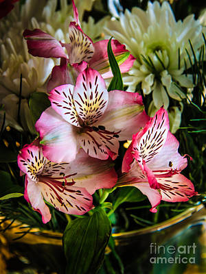 Lily Of The Incas Photograph - Alstroemeria by Robert Bales