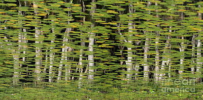 Altered Reflections Print by Howard Ferrier