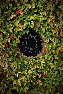 Grate Photograph - Amalfi Window Ivy by Henry Kowalski