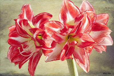 Lily Digital Art - Amaryllis Red by Jeff Kolker