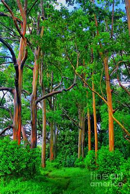 Amazing Rainbow Eucalyptus Print by DJ Florek