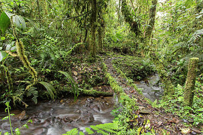 Epiphyte Photograph - Amazonian Cloud Forest by Dr Morley Read