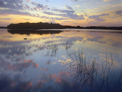 American Alligator Everglades Np Florida Print by Tim Fitzharris