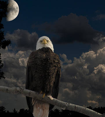 American Bald Eagle Composite Print by Thomas Young