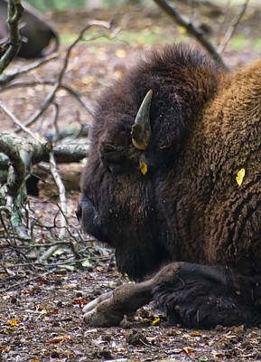 Buffalo Digital Art - american Bison by Chris Flees