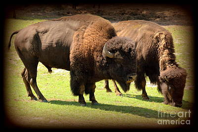Bison Digital Art - American Bison by Rev Richard W Burdett