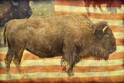 American Buffalo Print by James BO  Insogna