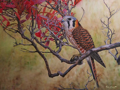 England Artist Painting - American Kestrel Female by Ken Everett