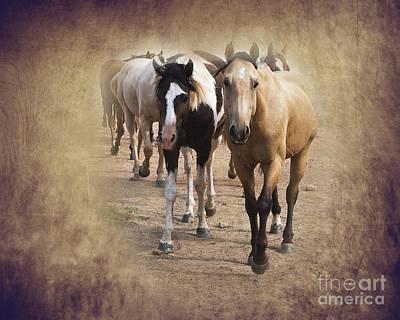 Quarter Horse Digital Art - American Quarter Horse Herd by Betty LaRue