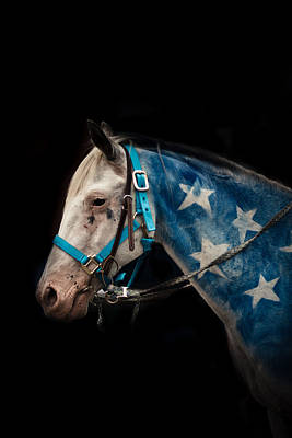 Horse Portrait Photograph - American by Shane Holsclaw