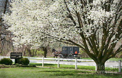Amish Buggy Fowering Tree Print by David Arment