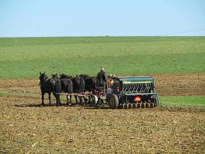 Amish Farmer In Field Print by Sara Knob