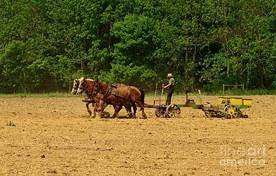 Horse-drawn Plow Photograph - Amish Farmer Tilling The Fields by Paul Ward