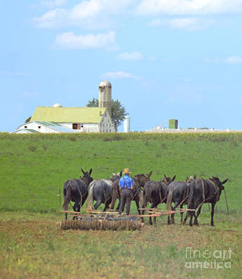 Amish Farmer Working The Land Print by Diane Diederich