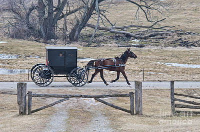 Amish Horse And Buggy March 2013 Print by David Arment