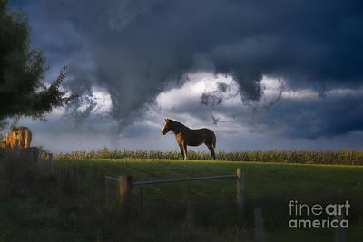 Amish Photograph - Amish Work Horse At Dusck by David Arment