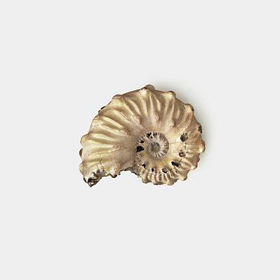 Ammonite Shell Fossilised In Clay Print by Dorling Kindersley/uig
