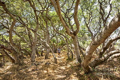 Luis Photograph - Among The Trees - The Mysterious Trees Of The Los Osos Oak Reserve by Jamie Pham