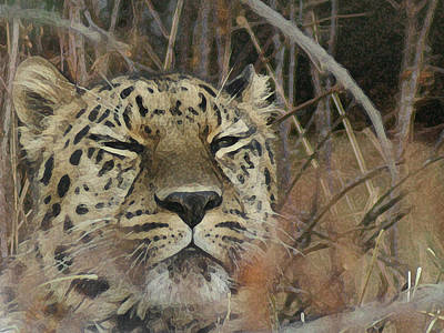 Leopard Digital Art - Amur Leopard 1 by Ernie Echols