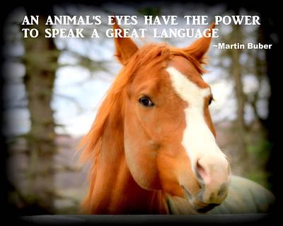 Horses Photograph - An Animal's Eyes Quotation by Aurelio Zucco