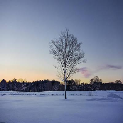 Appleton Photograph - An Appleton Tree At Dusk by David Stone