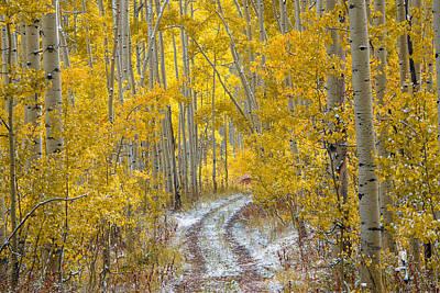 An Autumn Path Print by Leland D Howard