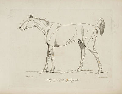 An Illustration Of A Horse Print by British Library