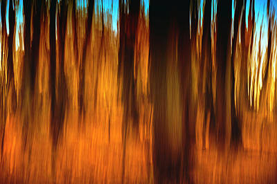 Indiana Landscapes Photograph - An Impressionistic In-camera Blur by Rona Schwarz