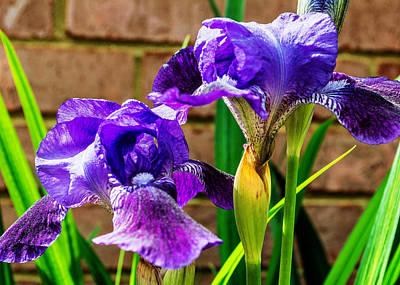 An Iris Blessing Print by Jon Woodhams