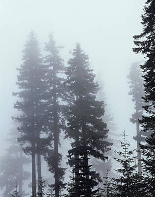 An Old Growth Forest In The Fog Print by Christopher Talbot Frank